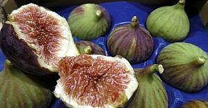Bursa'nın siyah incirinin ihracatı 7 liradan başlıyor