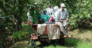 Fındık işçilerinin zor yaşamı