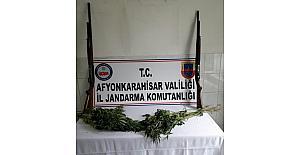 Jandarma 75 kök keneviri ile ruhsatsız av tüfekleri ele geçirdi
