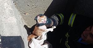 Rögara giren kediyi itfaiye kurtardı