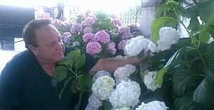 Sanatçının Ortanca çiçeğine yoğun ilgisi