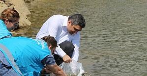 Yakuplar Göleti'ne 2 bin adet sazan balığı yavrusu bırakıldı