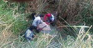 Nehre düşen hamile ineği itfaiye kurtardı