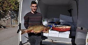 15 kiloluk Sazan balığı pazarın gözdesi