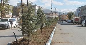 Muradiye'de yeşillendirme çalışmaları