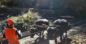 Orman köylülerinin yüzü ORKÖY destekleriyle gülüyor