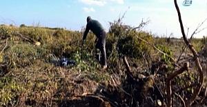 """""""Para etmiyor"""" diye bin 200 nar ağacını kesti"""