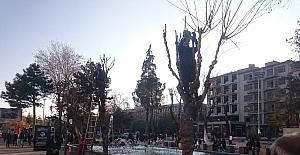 Uşak Belediyesi ağaçları bakıma aldı
