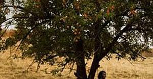 Ahlat Ağacı Cannes'da 15 dakika ayakta alkışlandı