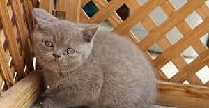 Nettepet.com / Satılık Köpek - Satılık Kedi İlanları Burada