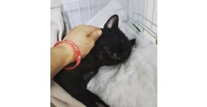 Pitbull'un saldırdığı yaralı kedi öldü