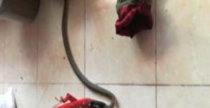 Markete giren yılan yakalandı