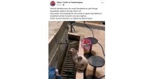 Sosyal medyada yürekleri ısıtan görüntü