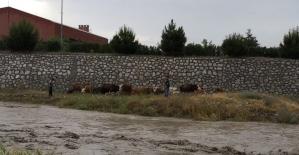 Yağmur suları yükselince dere kenarında mahsur kaldılar