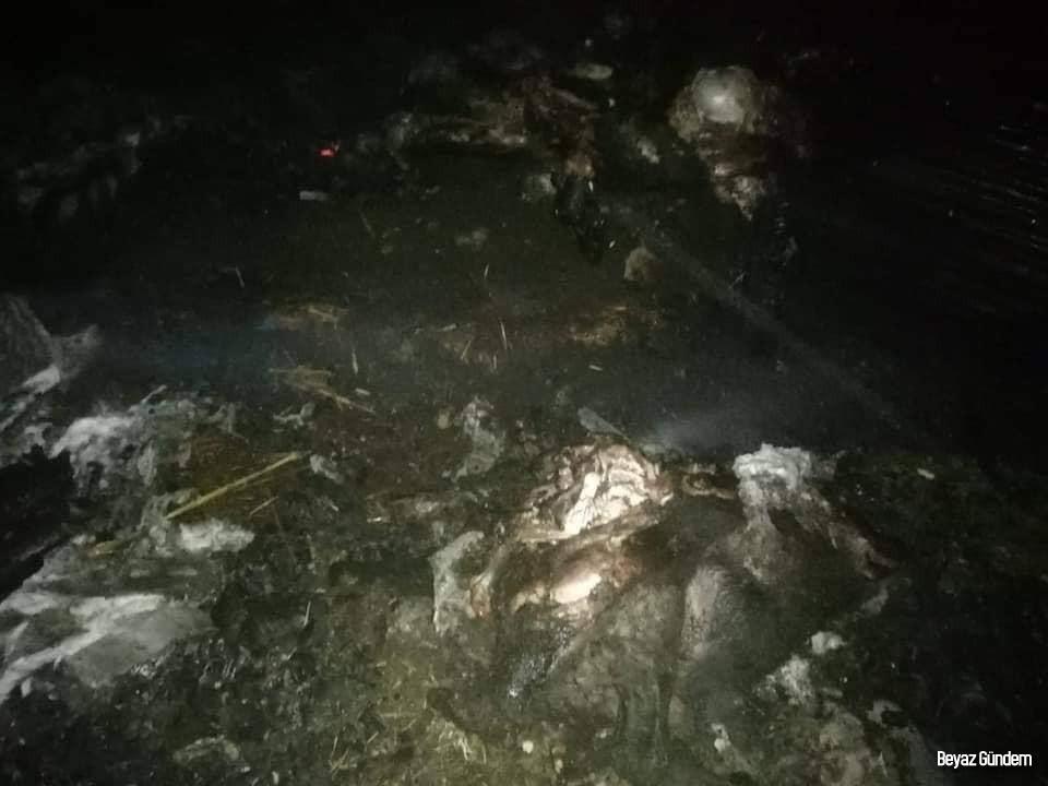 Ahır yangınında 120 küçükbaş hayvan telef oldu