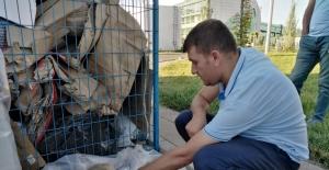 Bitkin düşen köpeği elleriyle besledi