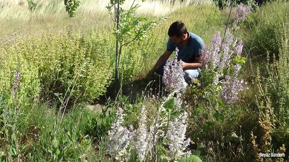 """Eczacı Özler: """"Kazdağları'ndaki bitkilerin iyileştirici gücü çok yüksek"""""""