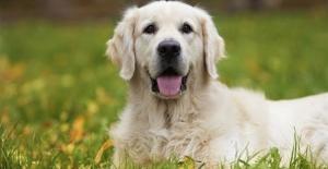 Evcil Köpekler İçin En Güzel İsimler