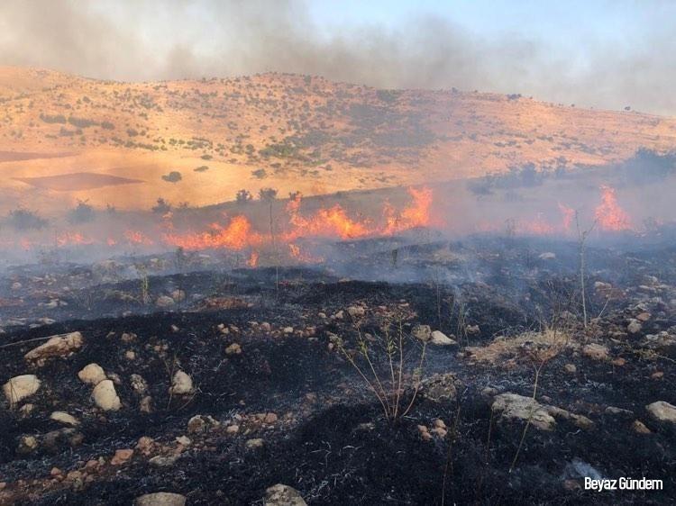 Mazıdağı'nda çıkan yangında 300 dönüm ağaçlık alan kül oldu