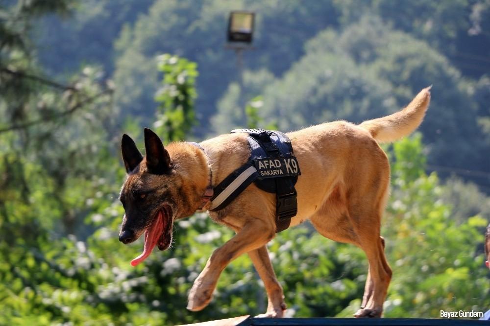 (Özel) Altın burunlu köpekler AFAD'da yetişiyor