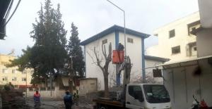 -Kilis'te cadde ve yollardaki ağaçların budanmaya devam ediliyor