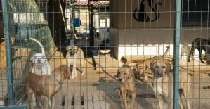 Mersin'de 800 köpek ve 550 kedi sahiplendirildi