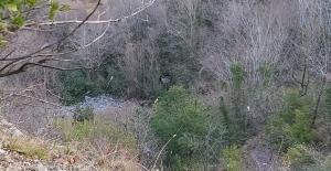 Aracıyla uçuruma yuvarlanan sürücünün cesedi, 1 gün sonra bulunabildi