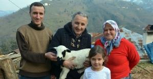 Besicinin ikiz ve üçüz kuzu sevinci