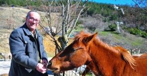 (Özel) Spil'in yılkı atları, onun yolunu gözlüyor