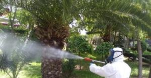Bayrampaşa haşere ve sineklere karşı ilaçlanıyor