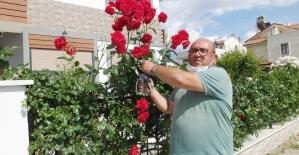 Burhaniyeli vatandaş evini gül bahçesine çevirdi