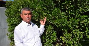 Çöl sıcağı mağduru çiftçilere destek gündemde