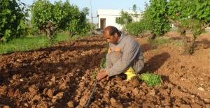 Gercüşlü çiftçiler korona virüse rağmen üretime devam ediyor