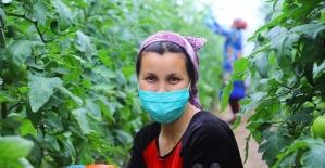Özbekistan'da dar gelirli ailelere sera desteği