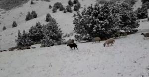 Tunceli'de kar sürprizi