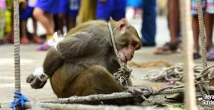 Maymuna ömür boyu hapis cezası