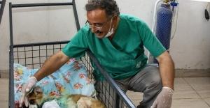 Mersin'de yaralı hayvan ihbar sayısı artıyor