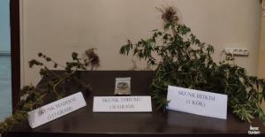 Kars'ta uyuşturucu madde ele geçirildi