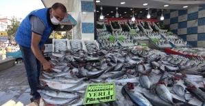 Türkiye'de palamut bolluğu yaşanıyor: Kilosu 10 liradan satılıyor