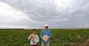83 milyonluk ürün hasadı çiftçilerin yüzünü güldürdü