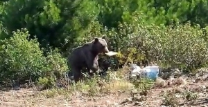 Aç kalan ayını orman işçileri besledi