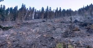 Kürtün'deki yangınlar kontrol altına alındı