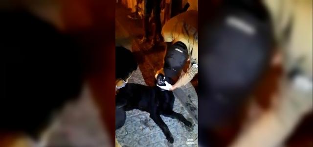 Zehirlenen köpek için bekçiler seferber oldu