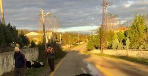 Tekirdağ'da araç inek sürüsüne daldı: 1 yaralı