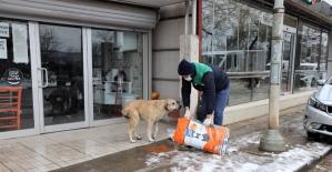 Başiskele Belediyesi sokak hayvanları için seferber oldu