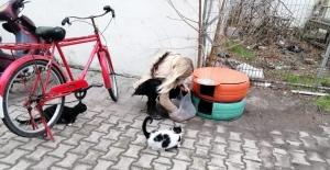 Eski araç lastikleri kedi evi oldu