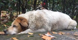 Kocaeli'de köpeklerin öldürülmesinde görev kusuru tespiti