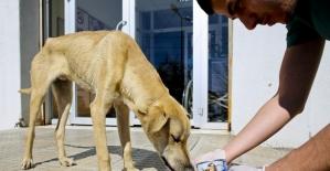 Maltepe Belediyesi 14 bin can dostunu tedavi etti