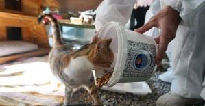 Mersin'de kısıtlamada sokak hayvanları unutulmuyor