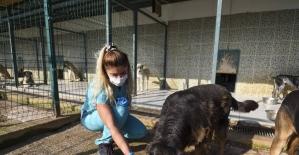 Muratpaşa Belediyesi'nden sokak kedileri için ameliyathane